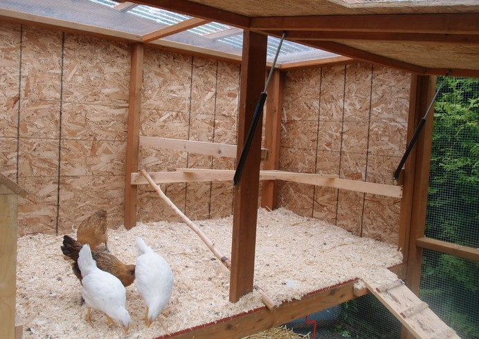 Chicken Home Programs — Look after Your own Backyard Parrots