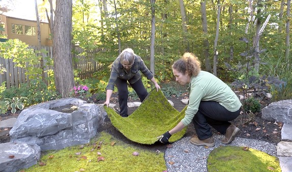 How you can Manage Your own Yard Moss
