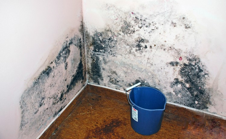 The most typical Causes of Water damage and mold
